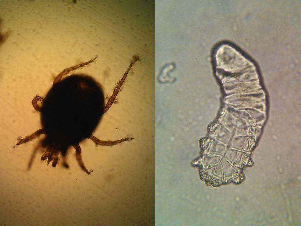 Diagnóstico quali-quantitativo de macroinvertebrados aquáticos